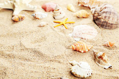 Starfish and shells on a sand beach Stock Photography
