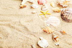 Starfish and shells on a sand beach Stock Photos