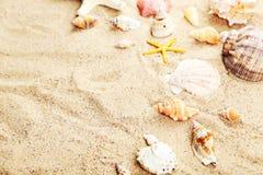 Starfish and shells on a sand beach Stock Photos