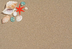 Starfish and shells Royalty Free Stock Image