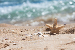 Starfish and shells in the sand near the sea. Standing Starfish and some shells in the sand near the sea Stock Images