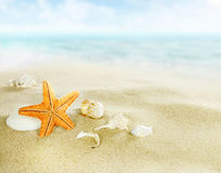 Starfish and shells on sandy beach Stock Image