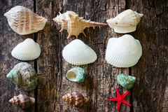 Starfish, shells, shell snails column on the old wooden table Stock Photography