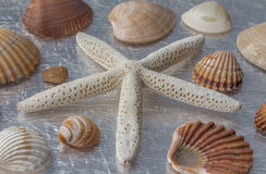 Starfish and shells. On a silver table Stock Images