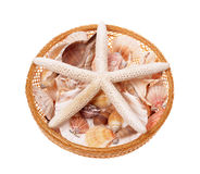 Starfish Royalty Free Stock Images