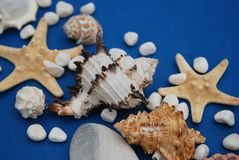 Starfish with Shells and stones Against a Blue Background with Copy Space. Summer Holliday. Nautical, Marrine concept. Starfish with Shells and stones Against a royalty free stock images