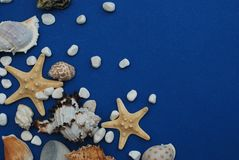 Starfish with Shells and stones Against a Blue Background with Copy Space. Summer Holliday. Nautical, Marrine concept. Starfish with Shells and stones Against a royalty free stock image