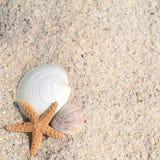 Starfish shells summer Stock Images