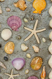 Starfish and shells to decorate on cement wall Royalty Free Stock Images