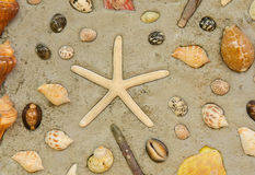 Starfish and shells to decorate on cement wall Stock Image