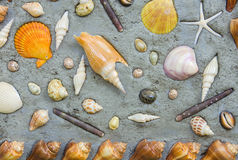 Starfish and shells to decorate on cement wall Royalty Free Stock Image