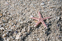 Starfish and shells on the tropical beach Stock Images