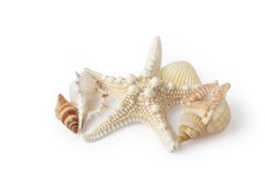 starfish and shells Stock Images