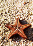 Starfish on shore. A upside-down look of a red starfish Royalty Free Stock Photography