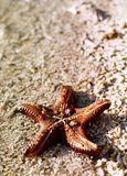 Starfish on shore. A upside-down look of a red starfish with movement Royalty Free Stock Photo