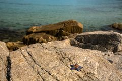 Starfish on the shore on the rocks in sunny weather stock image
