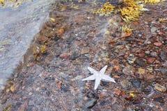 Starfish on the shore Stock Photos