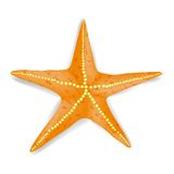 Starfish. Single Realistic Starfish  on White Background Stock Photography