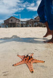 Starfish sits on sand. In-front of sea gypsies makeshift Royalty Free Stock Photo