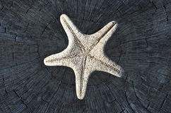 Starfish skeleton Stock Image
