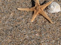 Starfish & snail. Starfish & snail on sand Royalty Free Stock Images