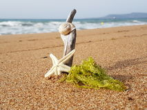 Starfish snail and moss is taking sunbath in the sand royalty free stock photos
