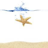 Starfish Splash Royalty Free Stock Photos
