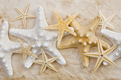 Starfish on stained paper Royalty Free Stock Photography