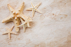Starfish on stained paper Royalty Free Stock Image