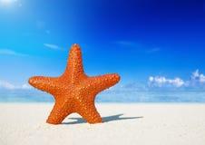 Starfish Standing on the Beach Stock Photo