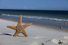 Starfish standing on the beach. With the ocean in the background stock photos
