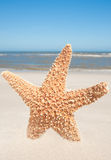 Starfish Standing In The Sand Stock Images