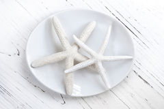 Starfish Still Life Background Stock Photo