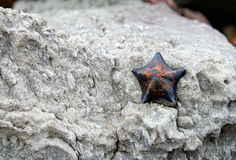 Starfish on a stone Royalty Free Stock Photography