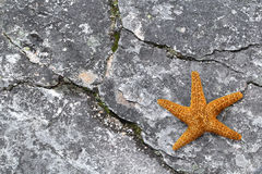 Starfish on stone Royalty Free Stock Image