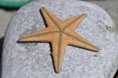 Starfish on the stone. Starfish at the beach,  on the stone Royalty Free Stock Images