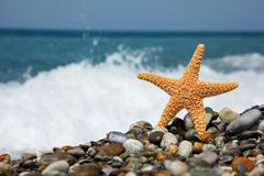 Starfish on stone seacoast Royalty Free Stock Photos