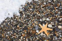 Starfish on stone seacoast Stock Photos
