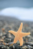 Starfish on stone seacoast Royalty Free Stock Image
