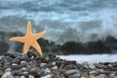 Starfish on stone seacoast Stock Image