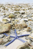 Starfish among stones Stock Photography