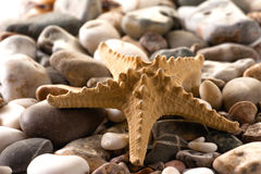 Starfish on stones. Starfish on the stony coast stock photography