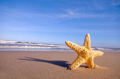 Starfish on the summer beach Stock Photography