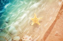 Starfish on the summer beach with sand. And wave. Summer background. Summer time Royalty Free Stock Photos