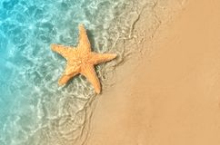 Starfish on the summer beach in sea water. Summer background. Summer time royalty free stock photo