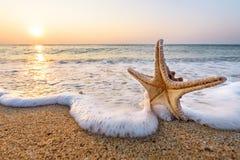 Starfish on summer. Stock Photo