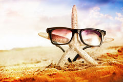 Starfish with sunglass Royalty Free Stock Photo