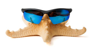 Starfish in sunglasses on vacation.  Stock Photos