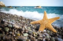 Starfish on a sunny beach. Starfish on the beach, blue sea,summer holidays stock images