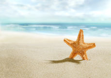 Starfish on sunny beach. Landscape with starfish on sunny beach Stock Photography